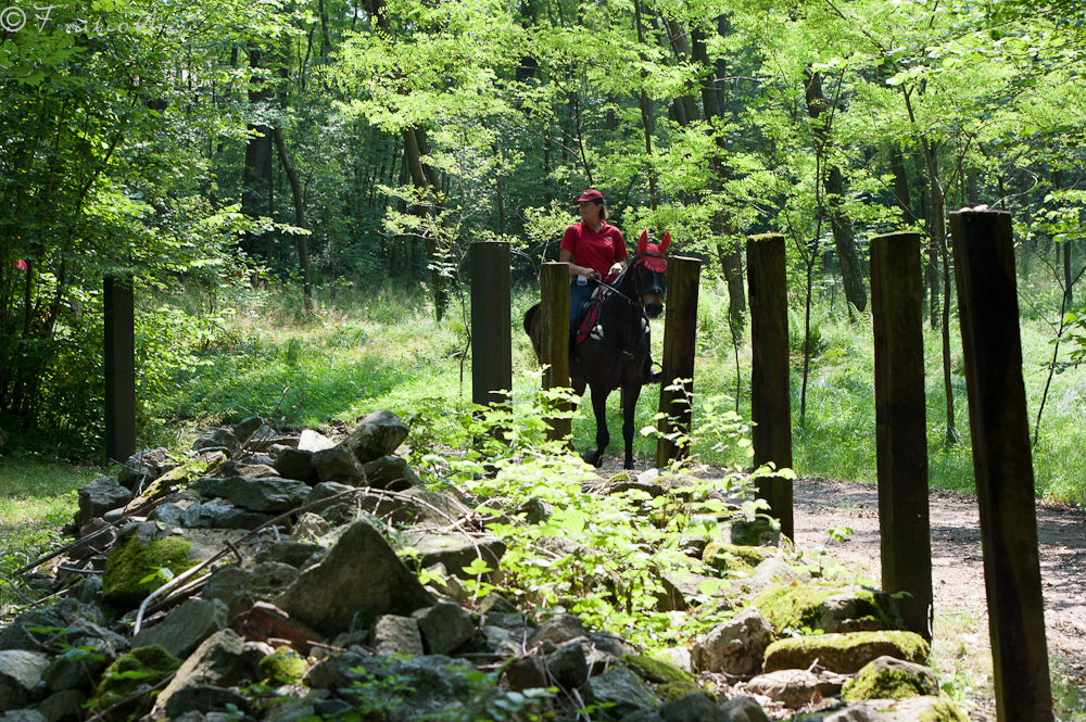 sentieri nei boschi