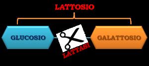 lattasi-lattosio
